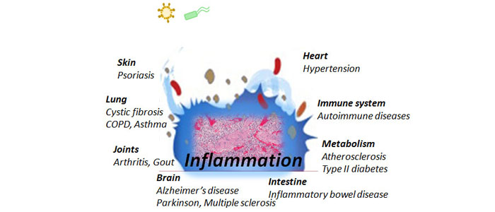 C.	Inflammation affecting heart, immune system, metabolism, intestine, brain, joints, lung and skin