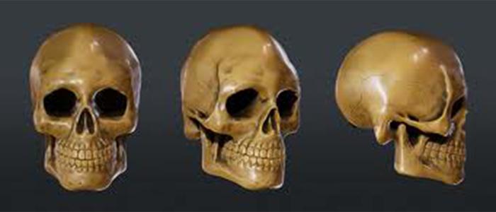 Trois vues du crâne humain