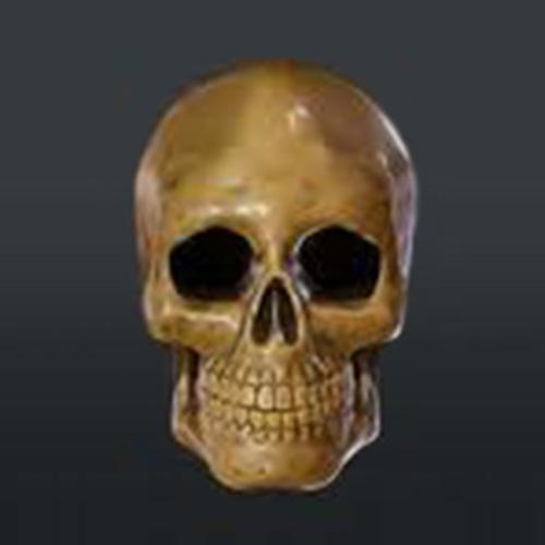 Image du crâne humain