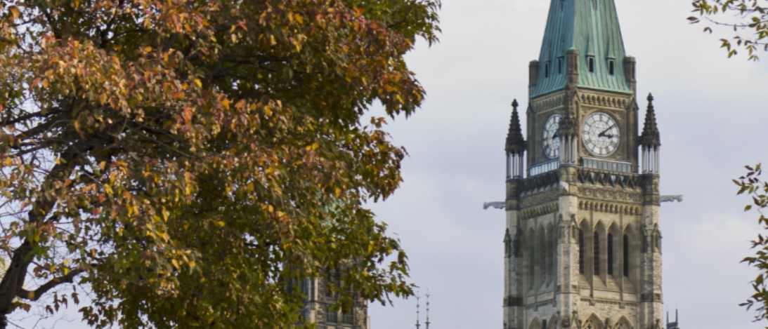 Maple tree with Peace Tower in the background