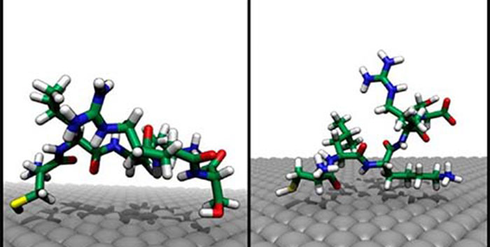 Molecular simulation of peptide adsorption to an Ag{111} surface