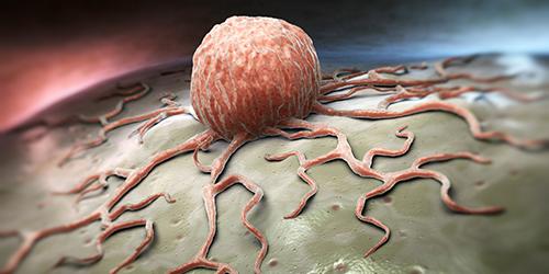 Une cellule attachée a un lobe tissulaire.