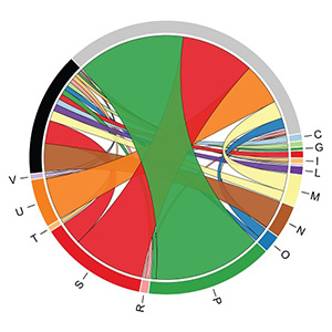 A circular graph composed of a variety of ribbons, displaying the expression of genes in iron activated versus iron repressed conditions.