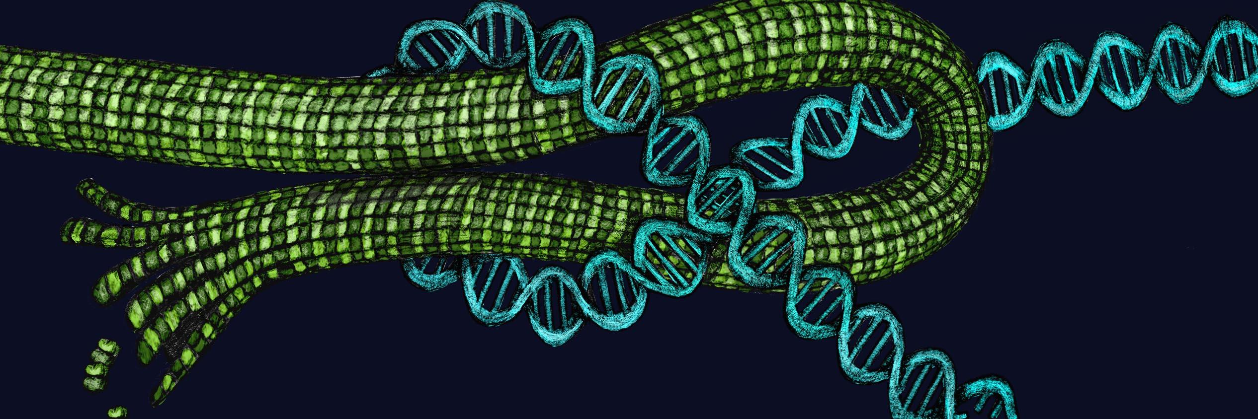 Microtubules sensing stress