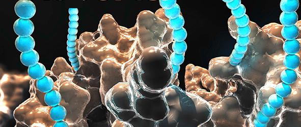 Poly phosphorylation