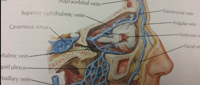 Education and training – Arteries and Veins of Orbit and Eyelids, Lateral view