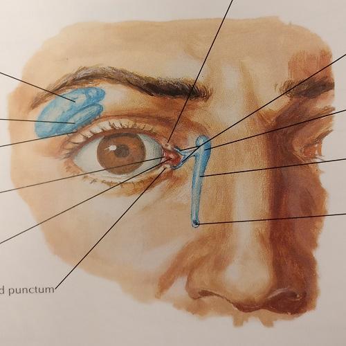 UGME - Eyelids, Lacrimal Apparatus