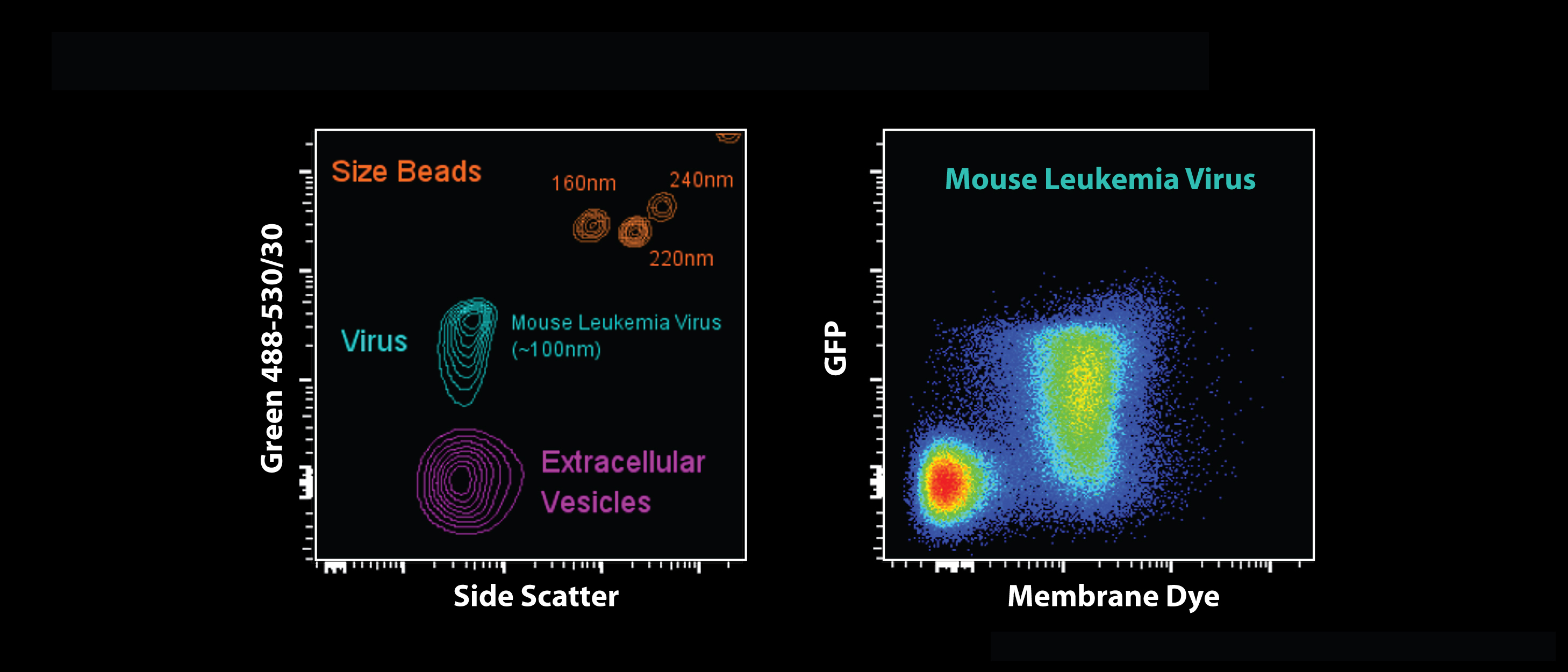 Types of Particles
