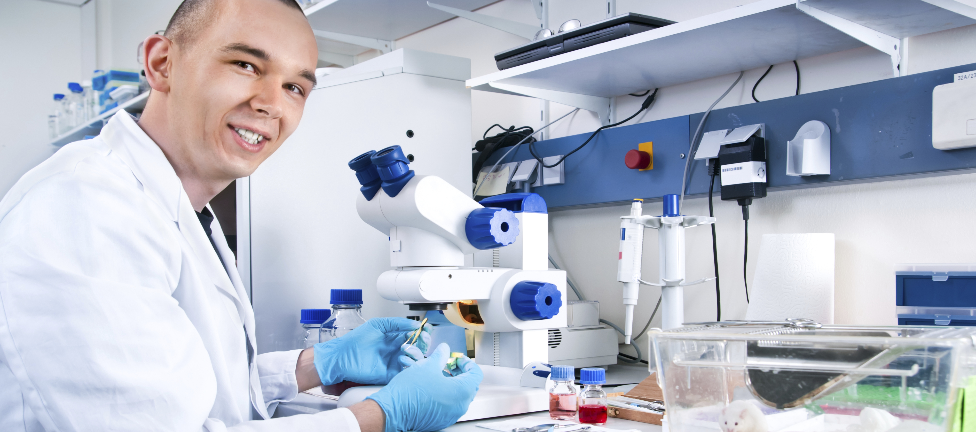 Scientist works with lab mice