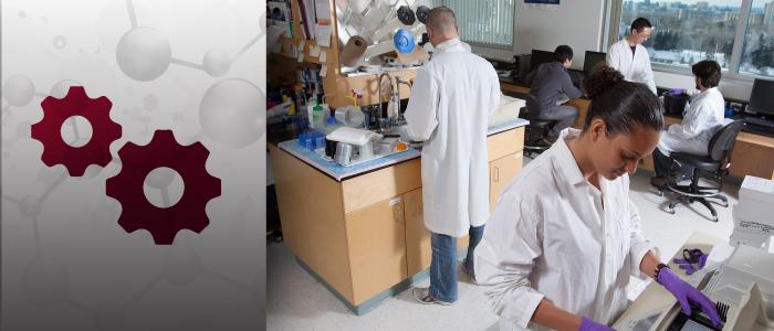 Étudiants en médecine travaillant au laboratoire