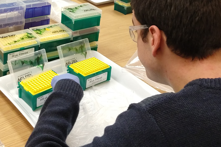 A man picks up pipette tips from a tray full of tips.