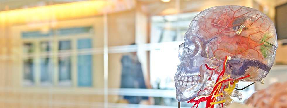 model skull image