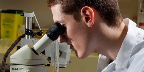 Researcher at the microscope