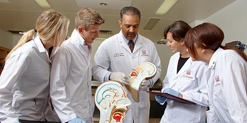 Docteur montre aux étudiants un modèle d'anatomie de la tête