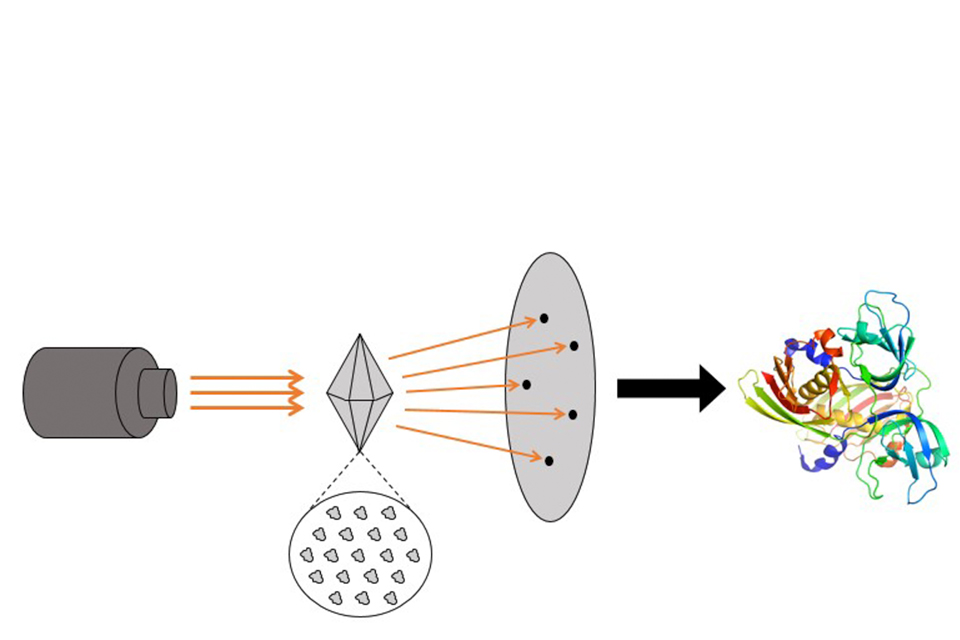 A diagram demonstrating X-rays irradiating a crystal composed of an orderly array of proteins, the X-rays then deflected by the proteins in the crystal thus creating a pattern on a screen, and the pattern analyzed to generate a detailed, 3D model of the i