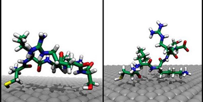 Simulation moléculaire de l'adsorption de peptides sur une surface Ag {111}