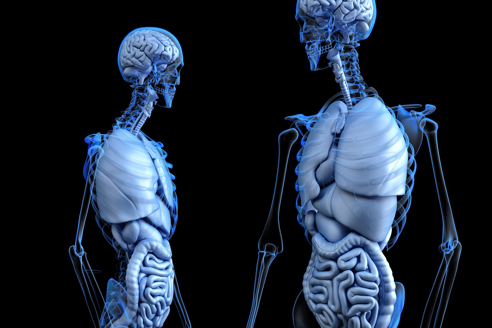 Two digitized blue skeletons on a black background with their internal organs displayed.