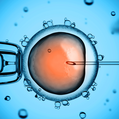 Stem Cell Biology and Organismal Development