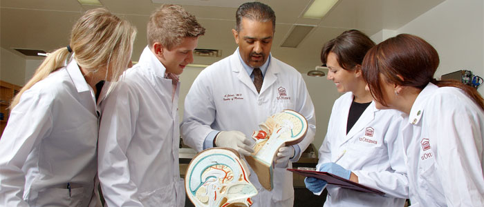 Doctor showing students a head anatomy model